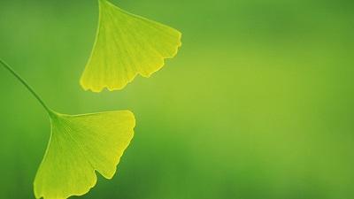 Win10自然风景电脑主题下载 多谢青云好知己,一花一叶一菩提