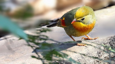 win10动物电脑主题下载:可爱的小鸟(10张1920x1080)
