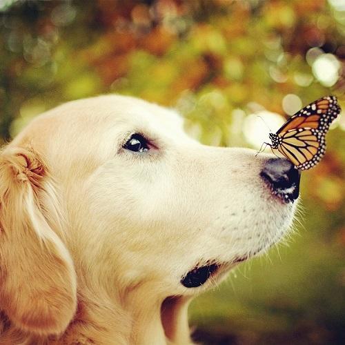 可爱动物头像:可爱宠物狗500x500分辨率图片