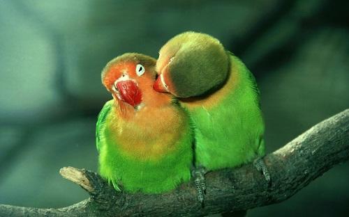 :动物的爱情故事