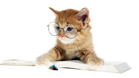 壁纸 动物 狗 狗狗 猫 猫咪 小猫 桌面 450_253