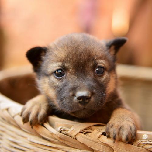 可爱动物头像图片500x500分辨率:生活总会有惊喜