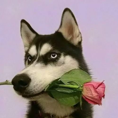 可爱动物头像:与君相伴走天涯