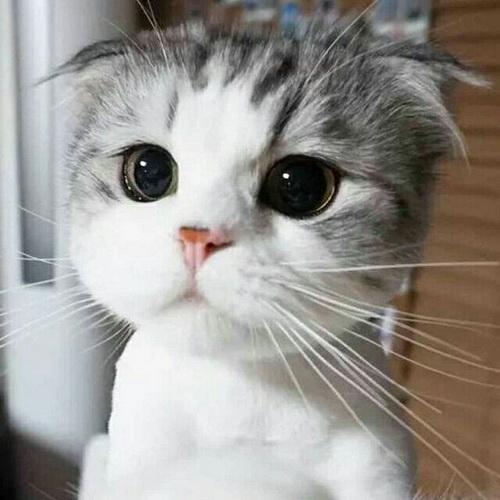 可爱动物头像:与君相伴走天涯_北海亭-最简单实用的